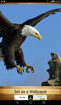 Eagle Wallpapers ( OFFLINE ) screenshot 1