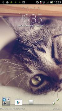 Kitty Live Wallpaper poster