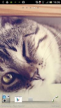 Kitty Live Wallpaper screenshot 1