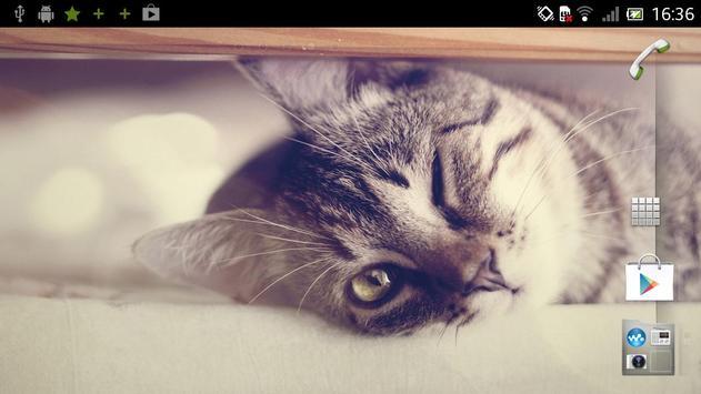 Kitty Live Wallpaper screenshot 2