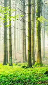 Green Nature HD Wallpapers apk screenshot