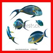 Cara Membudidayakan Ikan Mas icon