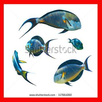 Cara Membudidayakan Ikan Mas poster