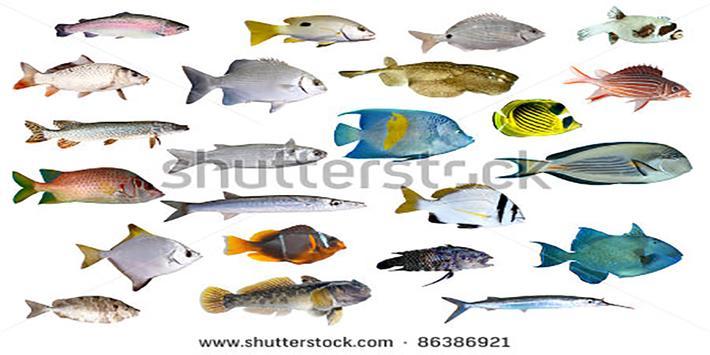 Cara Membudidayakan Ikan Mas screenshot 1