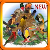 Canto de Pássaros Brasileiros NEW icon