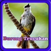 Masteran Kicau Burung TrucukaN icon