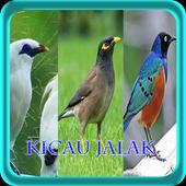 Master Kicau Jalak NEW icon