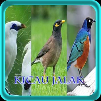 Master Kicau Jalak NEW poster