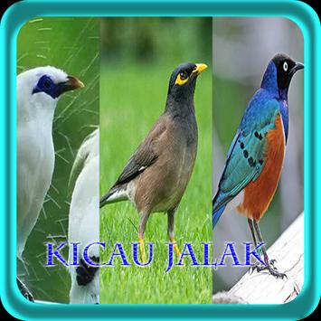 Master Kicau Jalak NEW screenshot 3