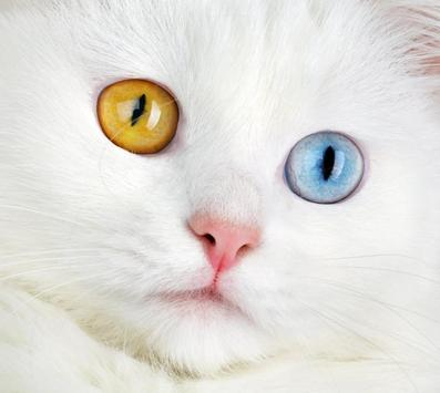 New Eye Color Changer apk screenshot