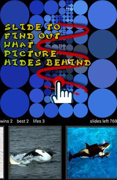 guess killer whale pictures hd apk download free puzzle game for