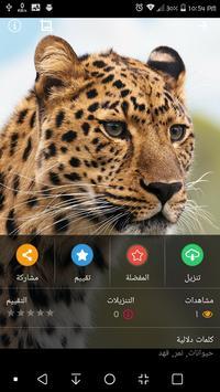HD Wallpaper screenshot 5
