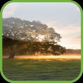 HD Tree Live Wallpaper icon