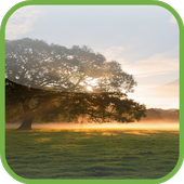 HD Tree Live Wallpaper icon