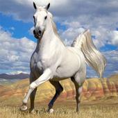 Horses Jigsaw Puzzles icon