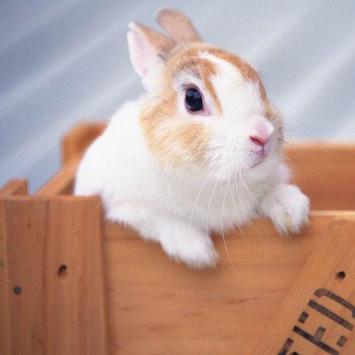 Rabbits Jigsaw Puzzles apk screenshot