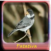 Passaros Cantos De Patativa icon