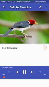 Trinca Ferro Canto De Passaros screenshot 4