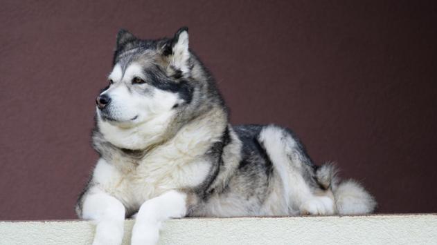 Pet Wallpaper HD - dog and puppy screenshot 10
