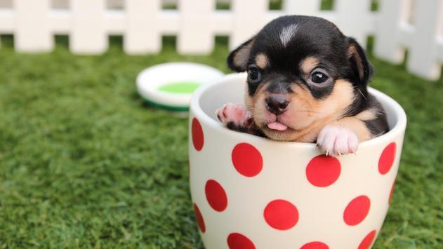 Pet Wallpaper HD - dog and puppy screenshot 11