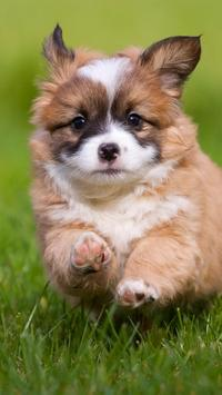 Pet Wallpaper HD - dog and puppy screenshot 1