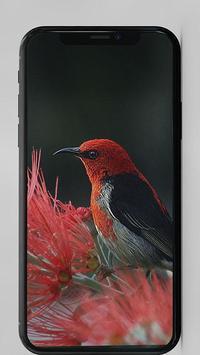 New HD Wallz screenshot 1