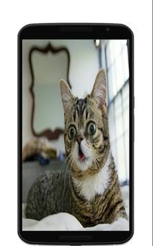 Звуки котов мартовских poster