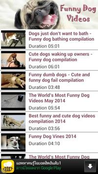 Funny Dog Videos poster
