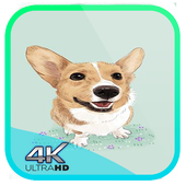 Dog Wallpaper Cute Shibaken's HD icon