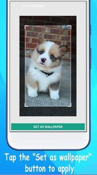 Dog Wallpaper Cute Shibaken's HD screenshot 2
