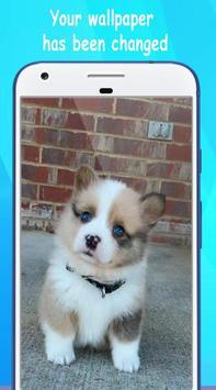 Dog Wallpaper Cute Shibaken's HD screenshot 3