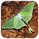 Bug Facts icon
