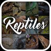Reptile Animal Encyclopedia icon