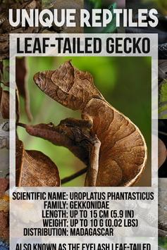 Reptile Animal Encyclopedia screenshot 1