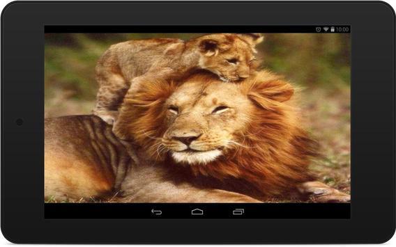 Lions Wallpapers screenshot 7