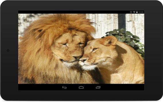 Lions Wallpapers screenshot 5