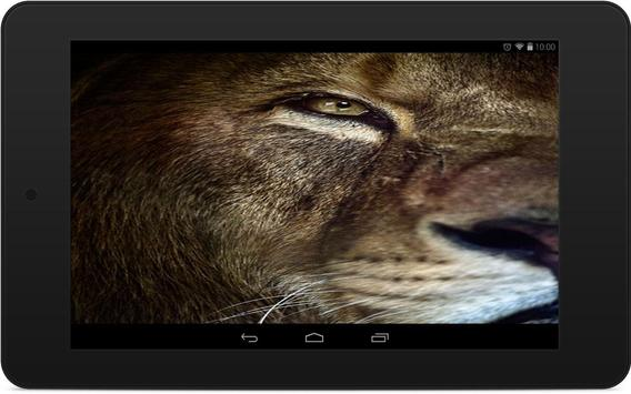 Lions Wallpapers screenshot 6
