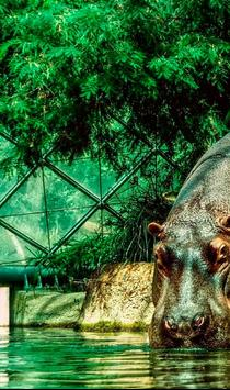 Hippo ONline cam poster