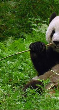 Panda ONline cam apk screenshot
