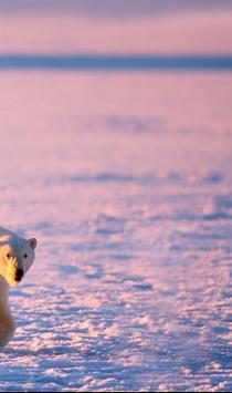 Polar Bears ONline cam apk screenshot