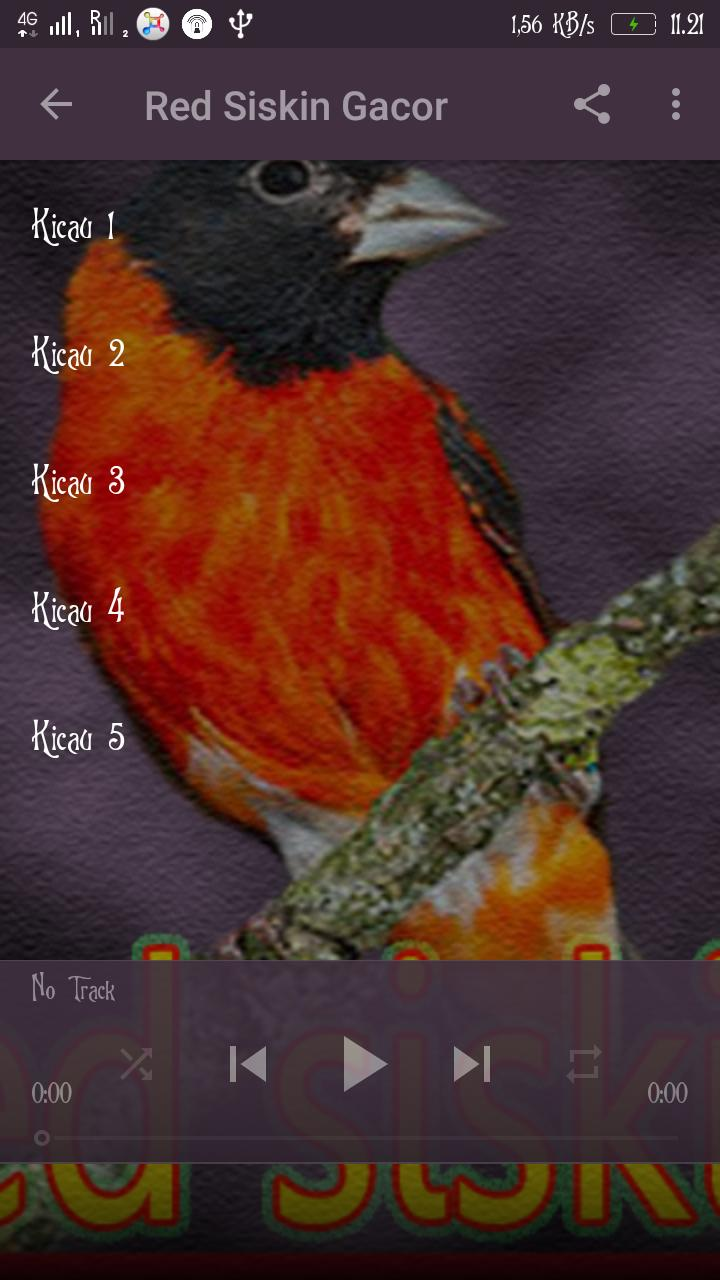 Kicau Red Siskin For Android Apk Download