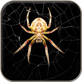 Spider Wallpapers icon