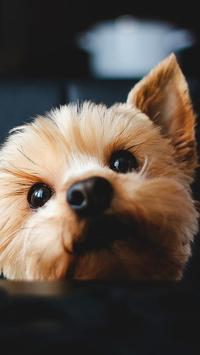 Cute Dog Pet Wallpaper!! apk screenshot