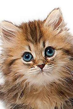 How To Drawing Cat Kitten apk screenshot