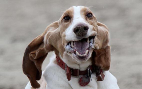 Funny Dog Wallpapers HD FREE apk screenshot