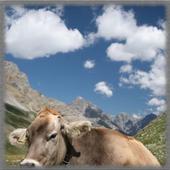 Cow Pastures Wallpaper icon