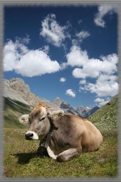 Cow Pastures Wallpaper poster