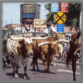 Cattle Drives Wallpaper icon