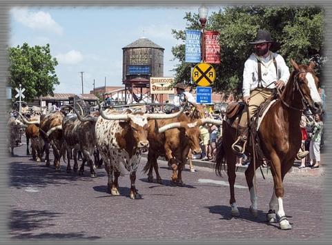 Cattle Drives Wallpaper poster