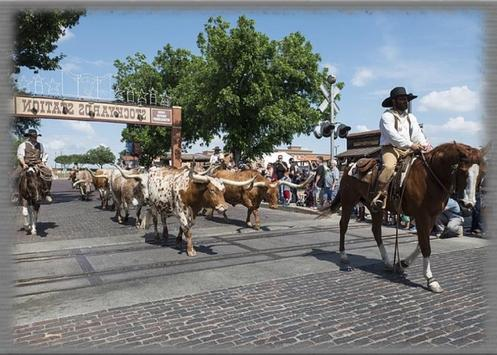 Cattle Drives Wallpaper screenshot 2